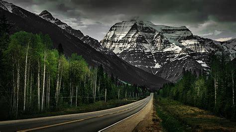 hd wallpaper grey asphalt road trees signs nature