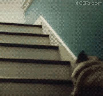 pug going up stairs 11 pug gifs to make your day better