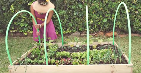 She Attaches 4 Hula Hoops To Her Small Garden. What She