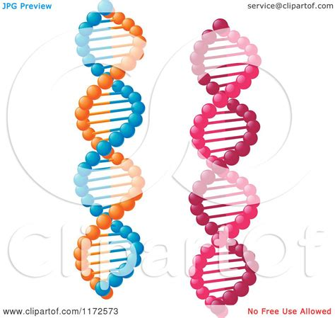 complementary of pink clipart of pink and orange and blue dna strands royalty