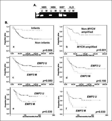 Midbass Genetic Cr 65 emp3 a myelin related gene located in the critical 19q13