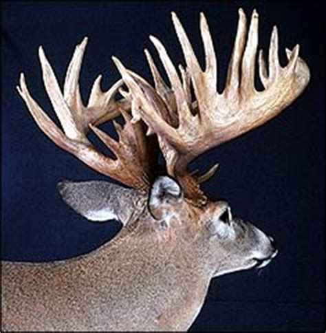 Deer Rack In The World by Illinois Bryant
