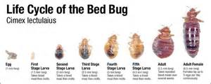 phdmc bed bug information