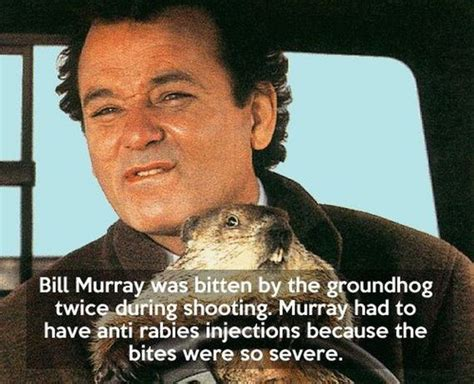 groundhog day trivia interesting groundhog day facts barnorama