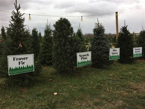cut your own christmas tree columbus farm archives what should we do today