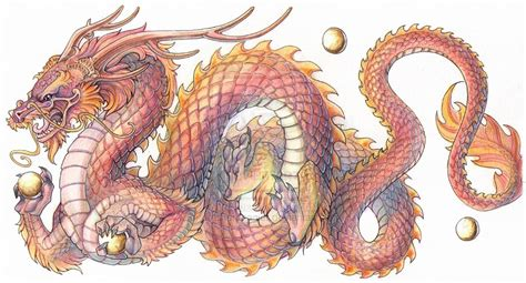 chinese dragon white background images awb