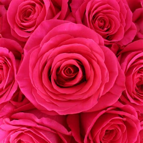 Floy Fuschia pink floyd rockstar