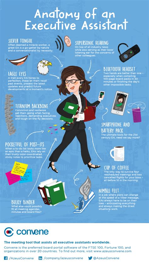 anatomy of an executive assistant infographic office