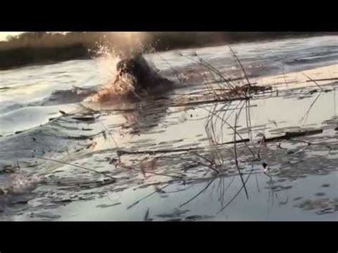 youtube video of hippo chasing boat chasing hippo june 13 youtube