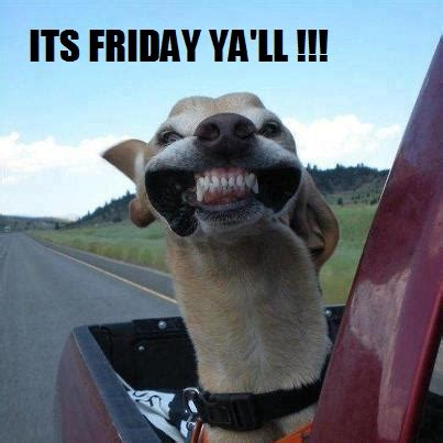 Its Friday Funny Meme - funny greyhound quotes
