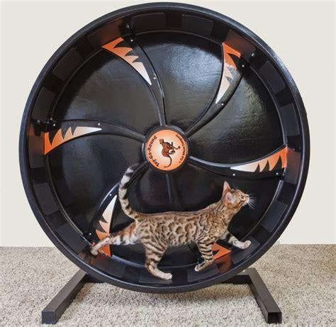 exercise wheel cat exercise wheel lookup beforebuying