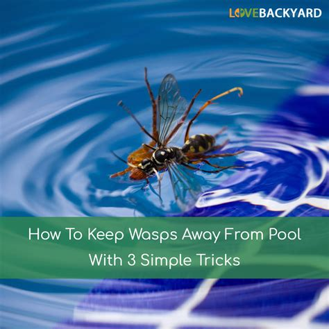 how to keep wasps away from house how to keep wasps away from pool with 3 simple tricks feb