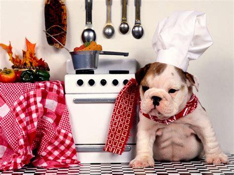 free puppies miami bulldog puppies miami hd desktop wallpaper