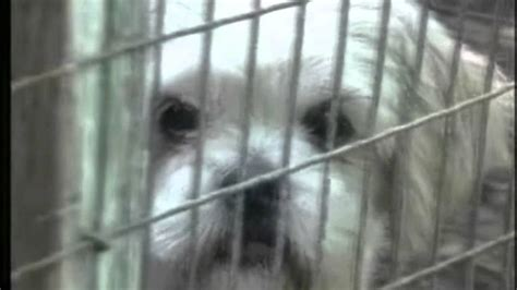 lancaster puppy farms amish animal abuse just b cause