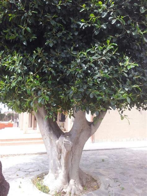 venta de plantas para jardin comprar 225 rboles ornamentales para jard 237 n