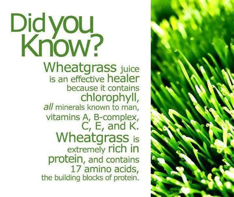 Wheatgrass Detox Thc by 51 Best Wheatgrass Juice Images On Healthy