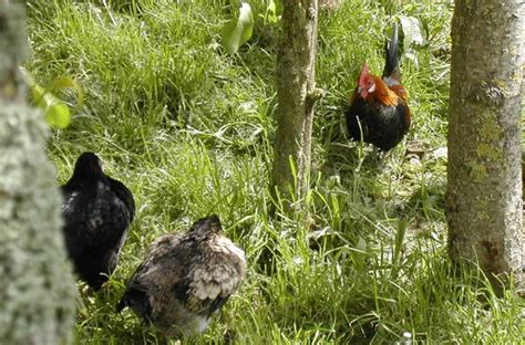 farm breeds totnes breeds farm top tips before you go 348 reviews 175 photos