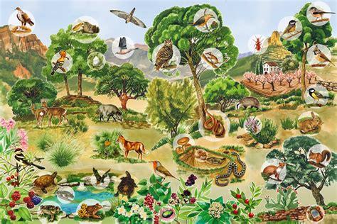 imagenes de ecosistemas naturales asxlab tics y recursos educativos los ecosistemas