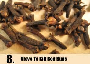 how to kill bed bugs home remedies bukit