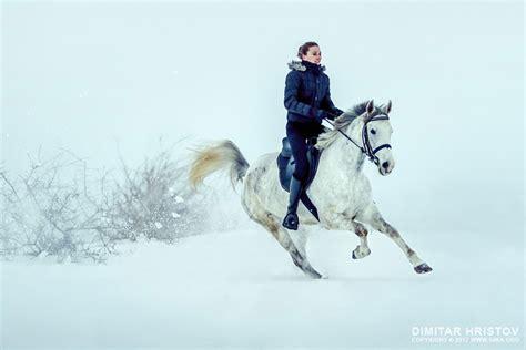 running horse  snow winter landscape ka photo blog