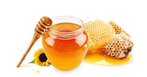 for honing honig ein wirkungsvolles heilmittel vitabonum