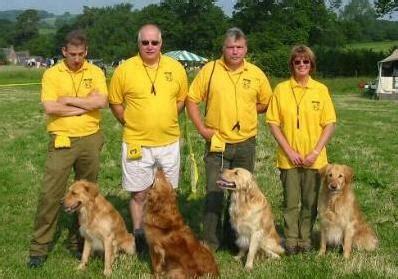 south western golden retriever club inter club working test the golden retriever club