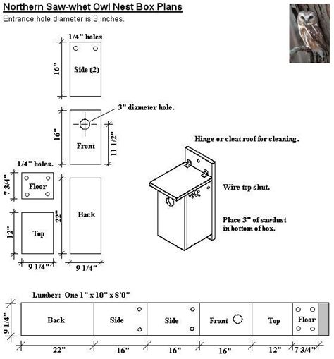 plans on how to build an owl nesting box the hungry owl project northern saw whet owl nest box plans for the birds