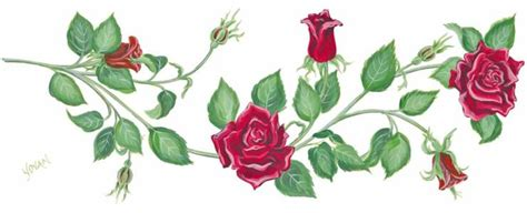 rose vine drawing at getdrawings com free for personal