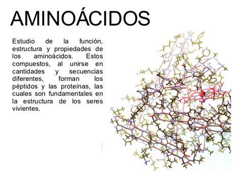 proteinas y aminoacidos amino 225 cidos y prote 237 nas