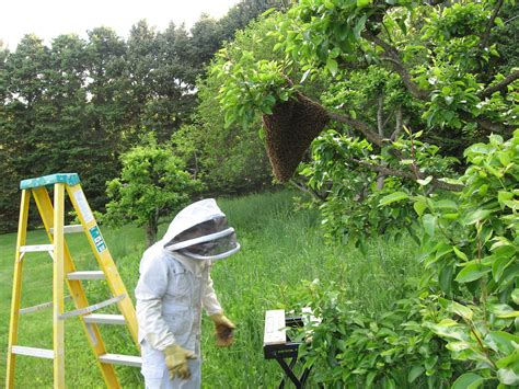 how to raise bees in your backyard 100 raising honey bees in your backyard how to