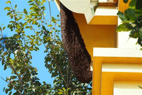 having a beehive in your backyard having a beehive in your backyard 28 images how to