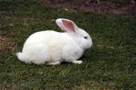 imagenes animales que saltan mil conejos blancos notas de mr kite
