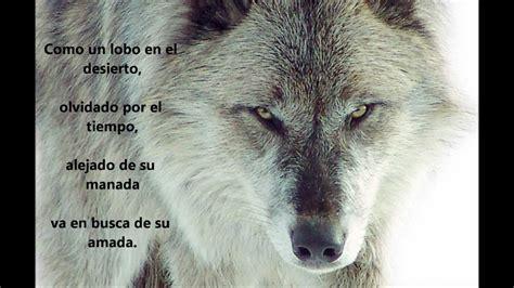 imagenes de lobos tristes lobos