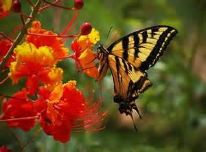 Orange Glory Flower - dialaflight blog a rainbow of national flower photos