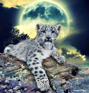 Snow leopard animated and illustrated cats pinterest