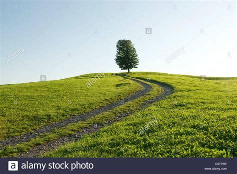 al camino alemania baviera allg 195 164 u 250 nico 225 rbol junto al camino
