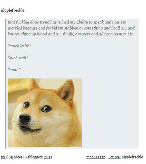 Such Dog Meme - doge meme much wow