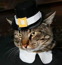 happy thanksgiving cats happy thanksgiving cats images amp pictures becuo