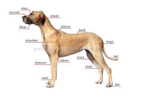 are dogs mammals animal kingdom carnivorous mammals morphology of a 1 image visual