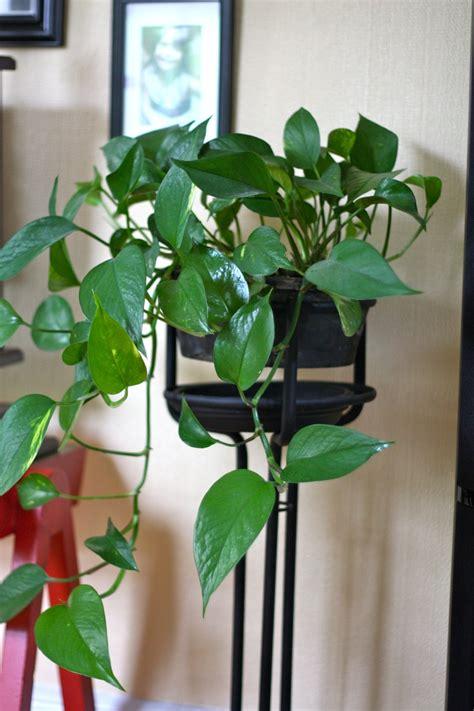 buy indoor house plants 1000 ideas about indoor house plants on pinterest house plants plants and tropical
