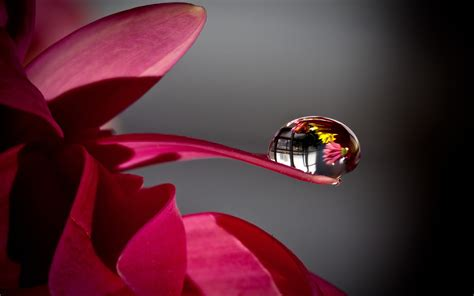 flower petals water hd wallpaper 1814076 macro photography flower with water drop photography