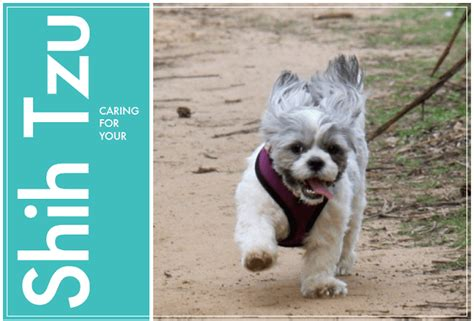 allshihtzu s book of shih tzu care books how to care for your shih tzu pooch spa news