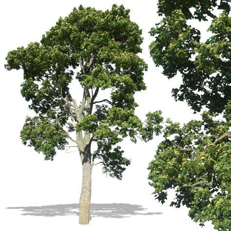 pattern photoshop trees texture jpg tree trees deciduous