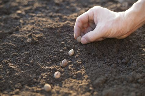 what is direct sowing learn how and when to sow seeds