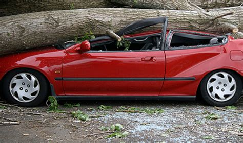auto insurance when a tree disaster insurance coverage