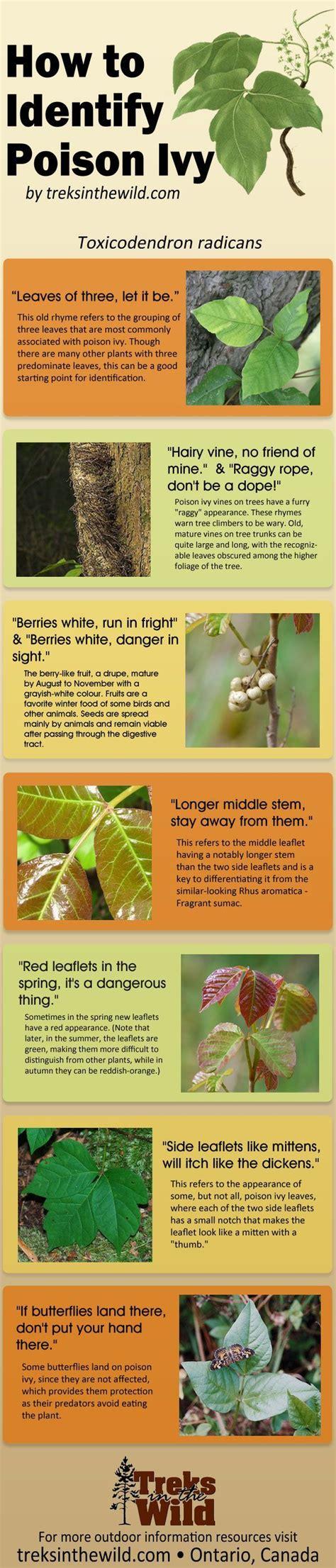 identify poison ivy leaves how to identify poison ivy gardening pinterest