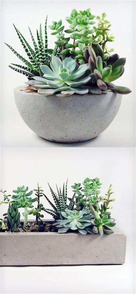 concrete succulent planter succulents in concrete planters lineandflow modern