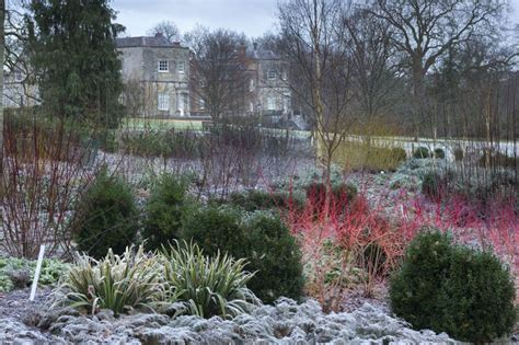 backyard winter gardening find your own national trust winter wonderland royal oak