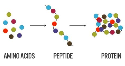 protein molecule diagram 20 facts about protein you probably didn t fitness