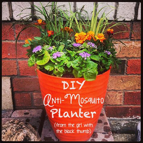 Mosquito Planter by Diy Anti Mosquito Planter The Inspired Home